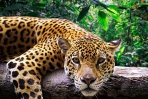 Οργισμένη η ανακοίνωση του Αττικού Ζωολογικού Πάρκου!