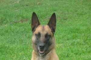 Θρήνος στην ΕΛ.ΑΣ.: Πέθανε η Agnes, η σκυλίτσα-θρύλος της Δίωξης Ναρκωτικών!