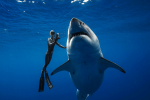 Απίστευτο βίντεο: Δύτες κολύμπησαν πλάι σε έναν γιγαντιαίο λευκό καρχαρία!