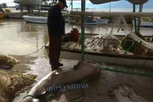 Απίστευτες εικόνες: Ψάρεψαν σκυλόψαρο στη Νέα Κίο!