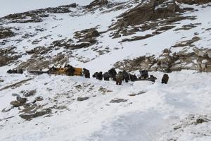 Κασμίρ: Τραγωδία με 5 νεκρούς από χιονοστιβάδα!