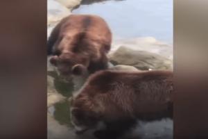 Απίστευτη γκάφα: Τάιζε αρκούδες και κατά λάθος τους πέταξε το iPhone του! (Video)