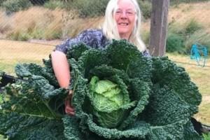 Το μεγαλύτερο λάχανο του κόσμου