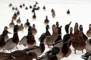 Η φωτογραφία της ημέρας: Καλημέρα από το χιονισμένο πάρκο της Ρίγας!