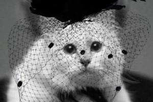 Η γάτα του Καρλ Λάγκερφελντ πενθεί!