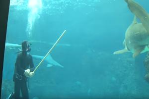 Κρήτη: Δύτες κολυμπούν ανάμεσα σε καρχαρίες σε ενυδρείο! (Video)