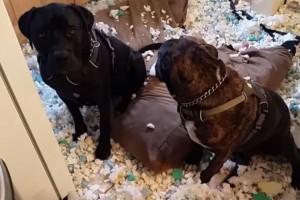 Αξιολάτρευτα: Δείτε την αντίδραση των σκυλιών μετά από...ζημιά!