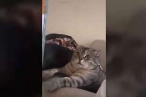 """Τρομερό βίντεο: Γάτα """"παγώνει"""" από τον φόβο της βλέποντας στην τηλεόραση λιοντάρια!"""