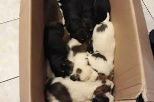 Κτηνωδία στην Ανδρίτσαινα: Άγνωστος πέταξε 18 κουτάβια σε γκρεμό