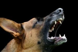 Σοκ στη Λάρισα: Αδέσποτος σκύλος επιτέθηκε και τραυμάτισε 68χρονη γυναίκα!