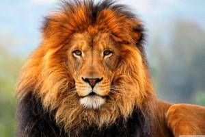 Σοκ: Λιοντάρι έφαγε 22χρονη στη Νότια Καρολίνα!