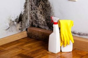 Καθαριότητα στο σπίτι: Μούχλα στο σπίτι σας; Έτσι θα το αντιμετωπίσετε!