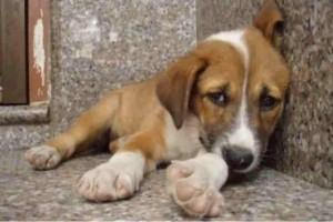 Ιεράπετερα: Νεκρό βρέθηκε σκυλάκι από ασιτία ύστερα από αμέλεια του ιδιοκτήτη!