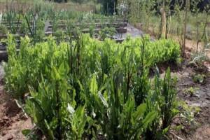 Θεσσαλονίκη: Ξεκίνησαν οι αιτήσεις για τους λαχανόκυπους του ΑΠΘ!
