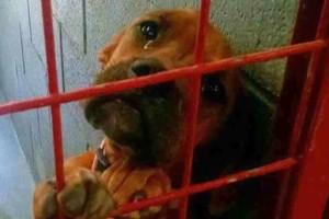 Σκύλος καταφυγίου με δάκρυα στα μάτια βρήκε νέα οικογένεια χάρη σε αυτή τη φωτογραφία που έγινε αμέσως viral