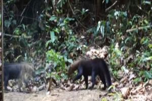 Άγρια ζώα έρχονται για πρώτη φορά σε επαφή με έναν καθρέφτη- Τα αποτελέσματα είναι απίστευτα!
