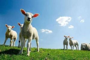 Κρήτη: Zωοκλέφτες έχουν αρπάξει πάνω από 7000 ζώα!