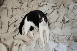 Πανικός: Aυτό συμβαίνει αν αφήσετε μια γάτα μόνη σε ένα δωμάτιο καλυμμένο με χαρτί υγείας! (Video)