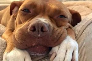 Αυτός είναι ο πιο ευτυχισμένος σκύλος! Και αυτός είναι ο λόγος!