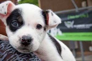 Έρευνα: Κι όμως λένε και οι σκύλοι ψέματα!