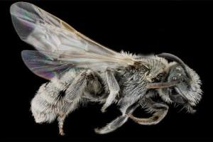 Μέλισσες πρωκτικό πορνό