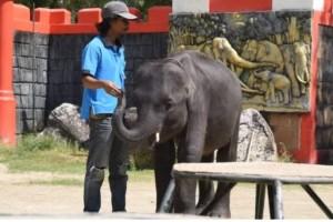 """Τραγικό: Πέθανε ο """"Dumbo"""" της Ταϊλάνδης!"""