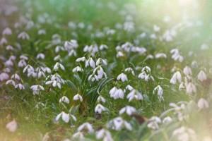 Ζώδια σήμερα: Τι λένε τα άστρα για σήμερα, Παρασκευή 24 Μαΐου;