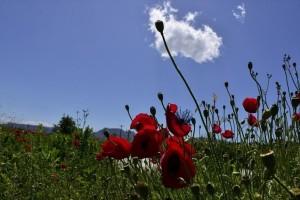 Η φωτογραφία της ημέρας: Καλημέρα σε όλους από την όμορφη Αργολίδα!