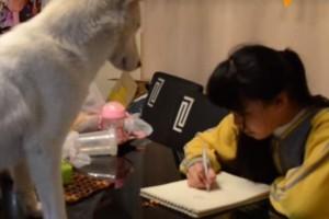 Kαι όμως...σκύλος επιτηρεί 11χρονη στο διάβασμα της! (Video)
