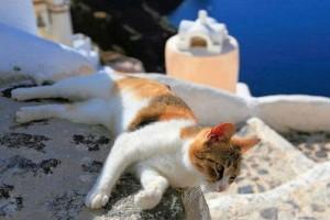 Η φωτογραφία της ημέρας: Καλημέρα από την όμορφη Σαντορίνη και το όμορφο γατάκι!