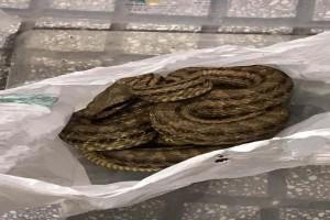Θρίλερ στην Θεσσαλονίκη: Φίδι προκάλεσε αναστάτωση σε εστιατόριο!