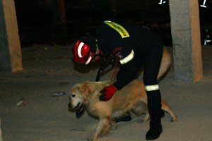 Σκύλος της ΕΜΑΚ βρήκε ηλικιωμένο που είχε εξαφανιστεί!