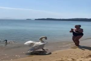 Όταν ο κύκνος εκδικήθηκε...μια τουρίστρια στην Σκιάθο! (Video)