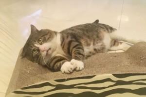 Αυτή η drama queen γάτα έχει γίνει viral για τις περίεργες αντιδράσεις της!(φωτος)