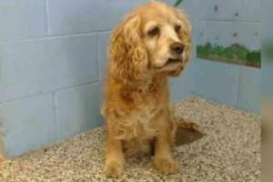 15χρονη σκυλίτσα κλαίει, καθώς ο ιδιοκτήτης της την παρατάει και απομακρύνεται με το νέο του κουτάβι!