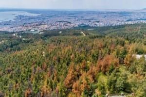 Θεσσαλονίκη: Με αγιασμό...ξορκίζουν το φλοιοφάγο έντομο!