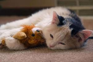 5 απίθανοι λόγοι που η γάτα κοιμάται μαζί σας!