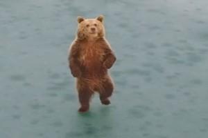 Καστοριά: H αρκούδα που διέλυσε αυτοκίνητο σε τροχαίο! (Video)