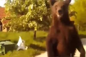 Το ανέκδοτο της ημέρας: Αγώνας με μια αρκούδα...