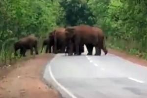 Συγκινητικό βίντεο: Η στιγμή που ένα κοπάδι ελέφαντες κηδεύει ένα ελεφαντάκι!