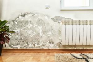 Μούχλα στο σπίτι σας; Πώς μπορεί να αντιμετωπιστεί;