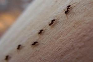 Εξαφανίστε με φυσικό τρόπο τα μυρμήγκια μια για πάντα!