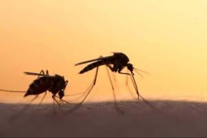 """Το μυστήριο λύθηκε: Αυτός είναι ο λόγος που σε """"κατασπαράζουν"""" τα κουνούπια!"""