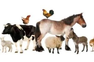 Ψυχαγωγικό τεστ που κάνει θραύση στο ίντερνετ : η έρημος και τα ζώα