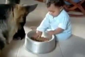 Το πιο γλυκό βίντεο του κόσμου! Μώρα ξεκαρδίζονται με σκυλάκια!