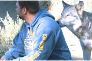 Η απίστευτη αντίδραση ενός άντρα τη στιγμή που τον πλησιάζει αθόρυβα ο λύκος!