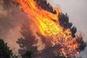 Φωτιά στην Μεσσηνία!