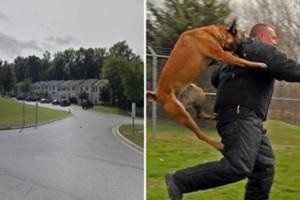 Αυτός ο ανώμαλος προσπάθησε να απαγάγει ένα δεκάχρονο κοριτσάκι. Τότε ο σκύλος της του έδωσε αυτό που του άξιζε!