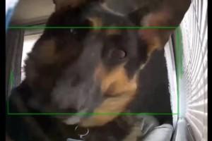 Ξεκαρδιστικό: Σκύλος «περιεργάζεται» κάμερα ασφαλείας! (Video)