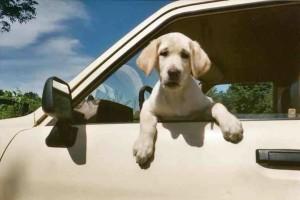 Γιατί τα σκυλιά βγάζουν το κεφάλι έξω απ'το παράθυρο του αυτοκινήτου!